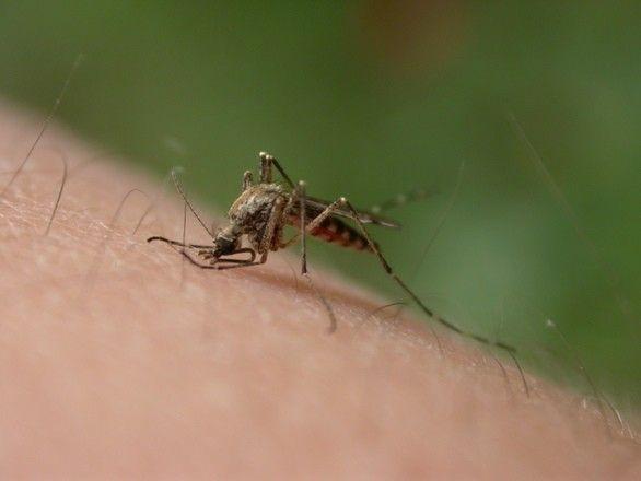 Moje ambulance bodnutí hmyzem2
