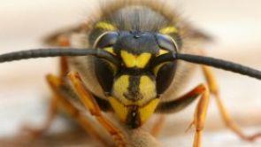 Bojíte se poštípání hmyzem?