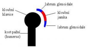 kloub1