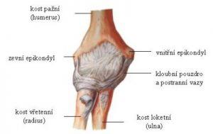 Artróza loketního kloubu   Fyzioterra